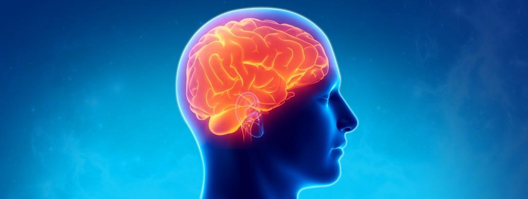 Les neurosciences au service de l'e-Learning